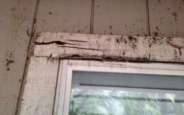 Preventing, Identifying, and Repairing Dry Rot